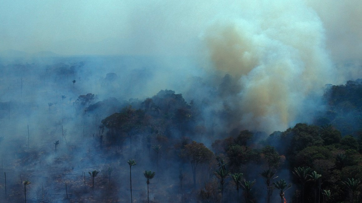 How we're tackling Brazilian deforestation
